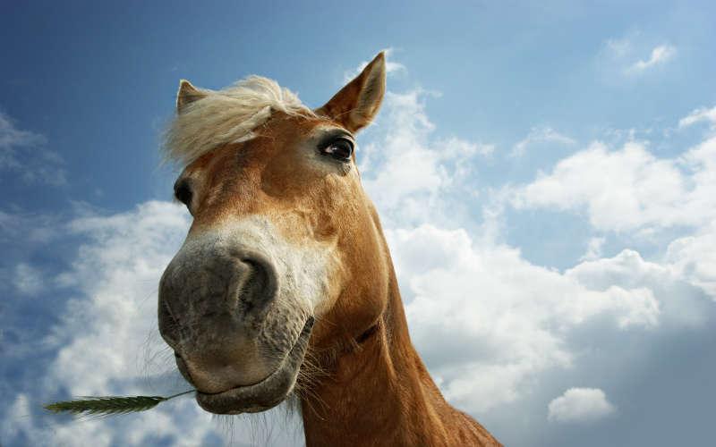 高清动物马背景图片素材jpg下载