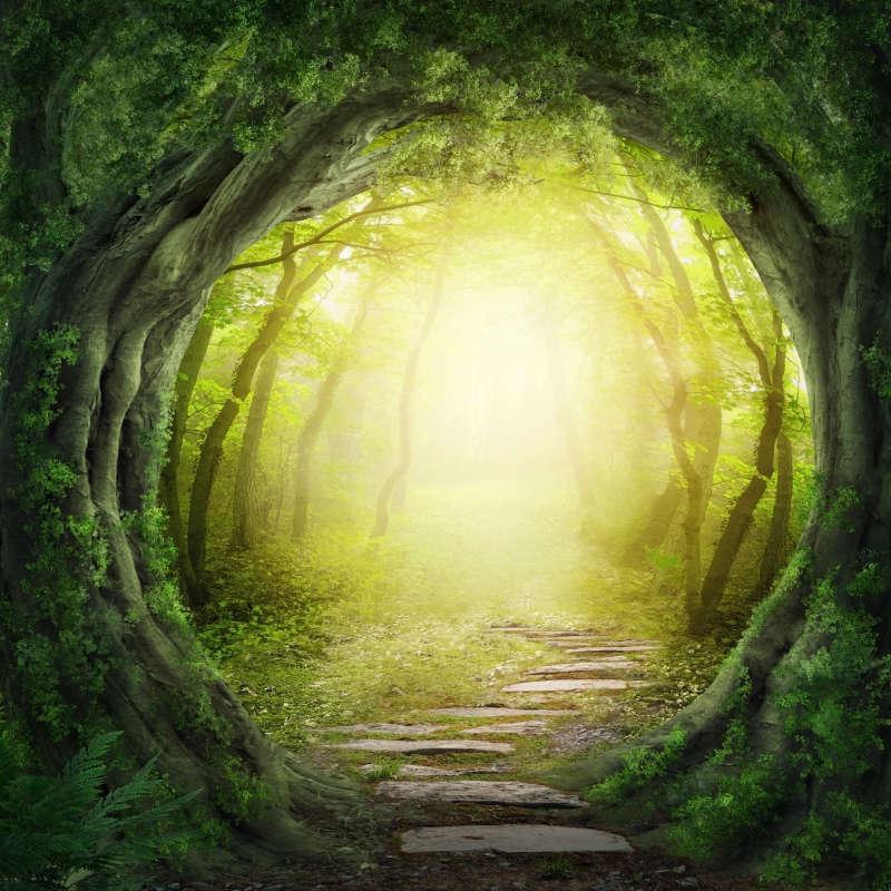 超清唯美漂亮的童话树林背景图片素材