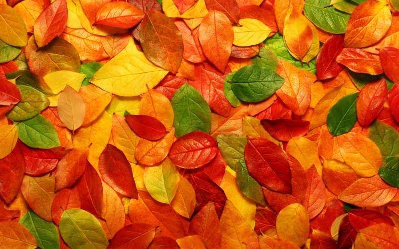 秋天风景漂亮的橙色树叶背景图片素材