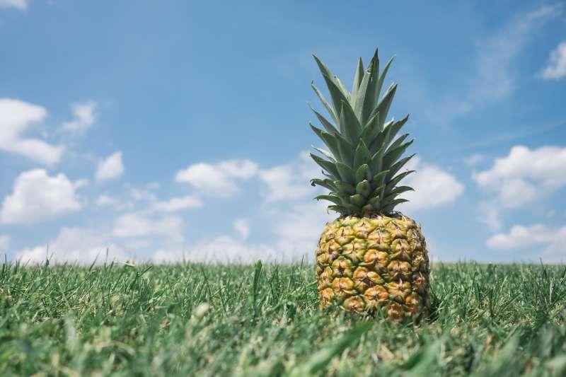 草地上生长的菠萝水果图片素材