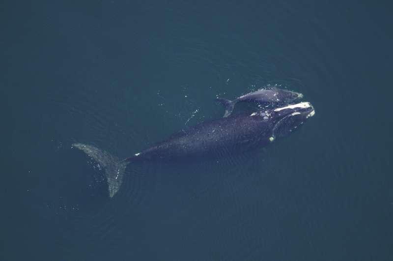 海面上的鲸牛图片大全素材