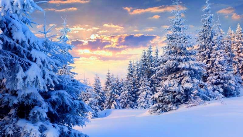 高清的夕阳下山上树林雪景图片素材