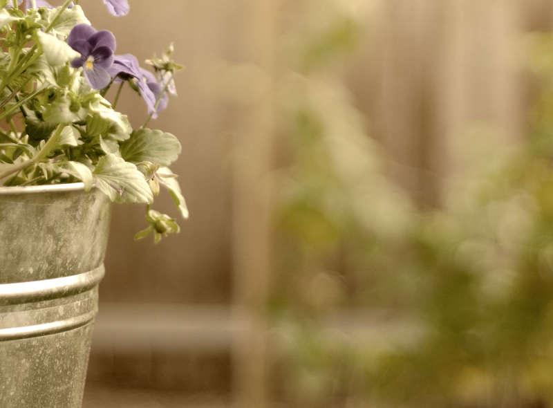 单个花盆图片_摄影花盆背景_绿色背景图片素材下载
